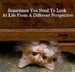 Differentview