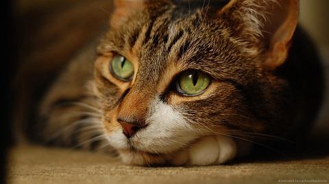 Philosopher-cat