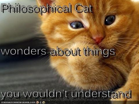 Philosophical-cat